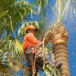 service icon - palm tree trimming & skinning